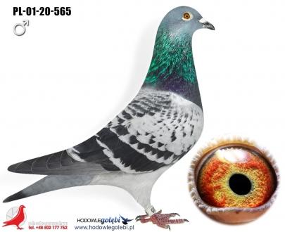 GOL_0144F8-8DEC60-BB614C-00E839-0DDBB7-F67266.jpg