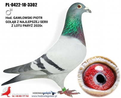 GOL_046707-848C5A-879131-83D599-29D6C2-42B333.jpg