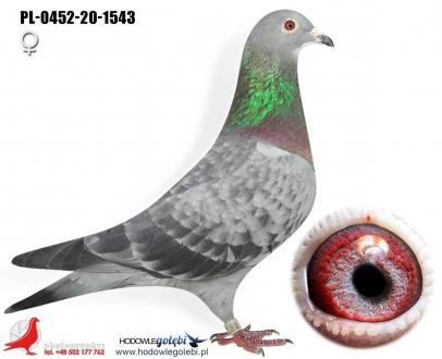 GOL_06B15C-42ADF2-7A57F8-DC1577-D81B66-764D70.jpg