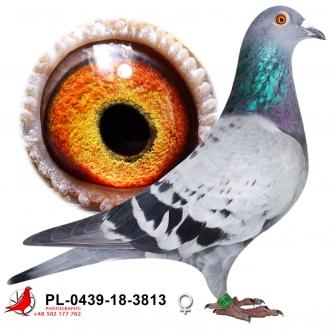 GOL_06C8E5-547A48-83420A-20BD75-BDCBCA-B1B6A7.jpg