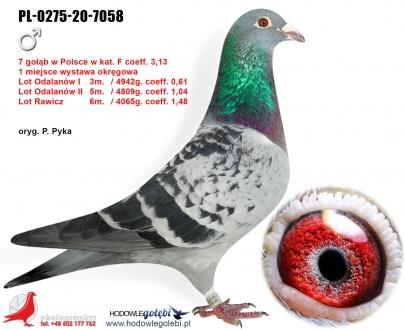 GOL_06F887-94F90D-0FD7B7-2ADB7A-333F94-BA0E51.jpg