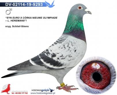 GOL_09A023-DF8861-580A4D-429E6D-DC57A1-9AE960.jpg