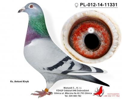 GOL_0C29B5-85387E-7E0537-146A15-D407BE-239211.jpg