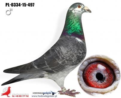GOL_0C7818-3A14B3-31ECD5-973955-030BCD-29996B.jpg