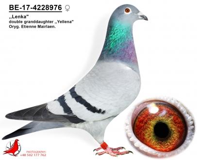 GOL_0CC529-16917A-561055-AA7A26-705601-C6998F.jpg