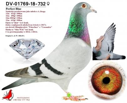 GOL_0E5D93-F9D08F-A6A521-CF5215-3029DA-F797F5.jpg