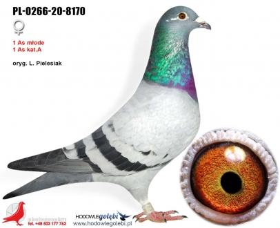 GOL_110412-B71901-EDC1E7-72DAF6-ED62BE-6E6F76.jpg