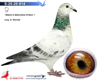GOL_11649F-77A3BA-97F261-00CA4B-5E3C83-2EAAED.jpg