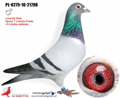 GOL_1191E8-B4D38D-58CC4A-84115C-5D2901-3BE4C0.jpg
