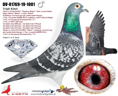 GOL_13AB71-8BE8AF-C63BCF-7A36DC-957969-9F0F7B.jpg