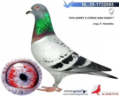 GOL_14D033-27CBBB-E4A015-A38CAF-A86211-2F8C46.jpg