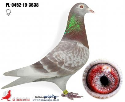 GOL_158997-63DA16-2F6793-7688B7-8BB0BA-EAE0A9.jpg