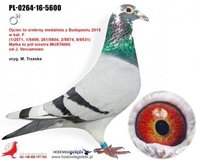 GOL_15A42D-C38151-721874-1B64D0-136F66-EA4CD4.jpg