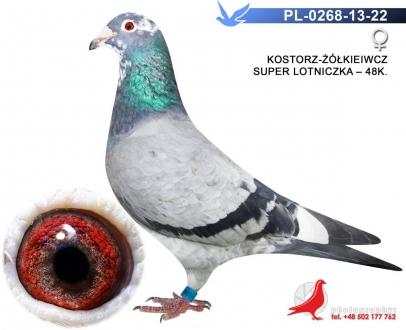 GOL_16E0E7-AEC366-D8342C-F66485-C67FAA-902BC3.jpg