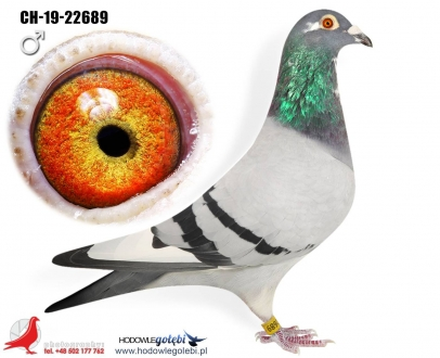 GOL_18503F-2F82A6-7972D5-2ACEB6-98239C-BDC133.jpg
