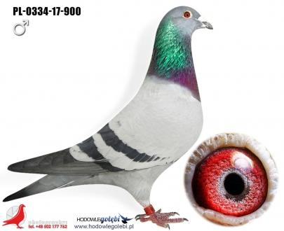 GOL_1AA4D9-993DF8-A59F0A-351E5C-21FB05-3F7690.jpg