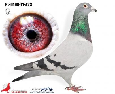 GOL_1B559A-ACF7BA-13E63D-8A21B2-417BEA-4A11B6.jpg