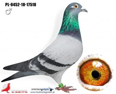 GOL_1EB8E0-667B6A-2FFC13-AD5A47-A16E1D-21F59A.jpg
