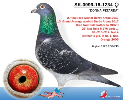 GOL_2009A8-C17EC4-52F329-2A9931-E4E164-86B804.jpg