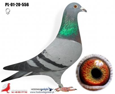 GOL_23270F-88E5E1-FE4DD8-B1C9C7-3806FC-BB8728.jpg