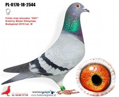 GOL_23C6A4-BF15A3-3A986B-D49D64-06BB37-38CFCA.jpg