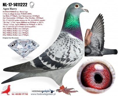 GOL_253FA1-3C2B98-6318C1-F62FEA-6BF50B-4D262E.jpg