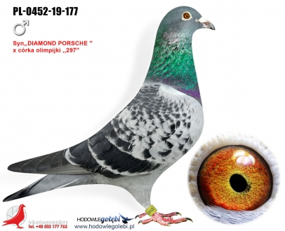 GOL_260AAD-3B59A0-584C03-1BFEF9-A68588-0C8CA2.jpg