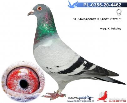 GOL_28810D-AAE839-1F382E-DBEEF1-EA6B32-1BDE24.jpg