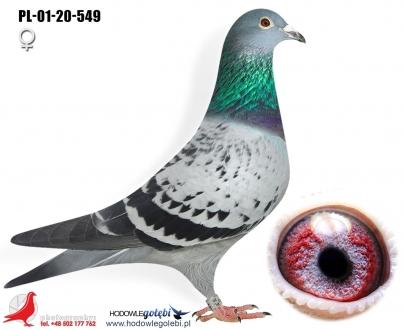GOL_297E42-C12131-2905E0-F11212-D769FE-88DFED.jpg