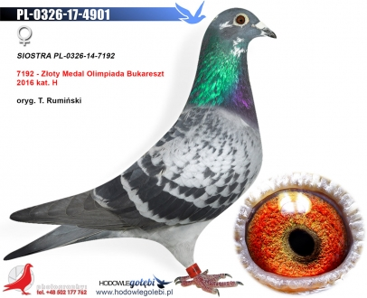 GOL_2A545C-D04044-EDE559-9EB497-7B8652-6681B0.jpg