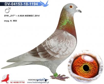 GOL_2CDC16-8BDAAC-BE5DEB-2D41EF-9DE5C0-C5D182.jpg