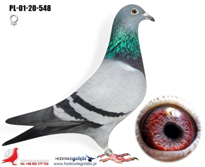GOL_2CFE18-575980-0F9068-4E5830-50DE78-4EE466.jpg