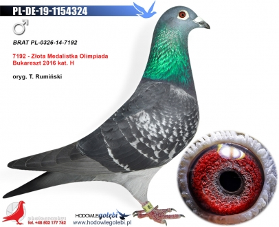 GOL_2D53D9-DF9D6E-7B271B-082848-ADAF55-E9B6BC.jpg