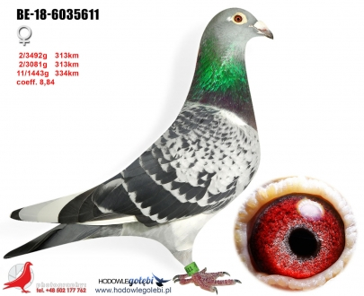 GOL_2F6552-A44C20-40332A-D429CE-579DC6-8B9546.jpg