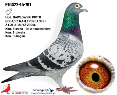 GOL_30321C-24EAD8-93EF79-E5F4E0-FE85E4-72790B.jpg