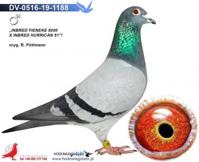 GOL_30A8F6-0E3F2D-8F2279-FBB99A-E51623-9BDF42.jpg