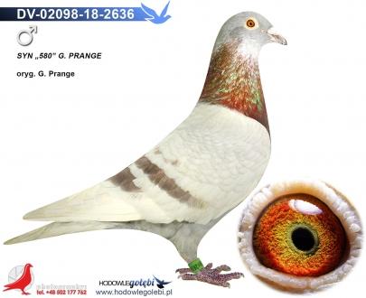 GOL_31206A-9D826C-05F3D1-B4F61C-99D97D-DDC7EB.jpg