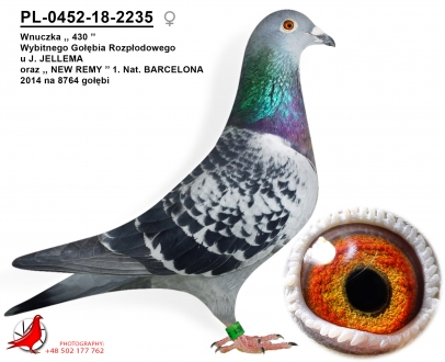 GOL_312CEC-9DEC5D-481405-F9405E-407FC4-B1D9C3.jpg