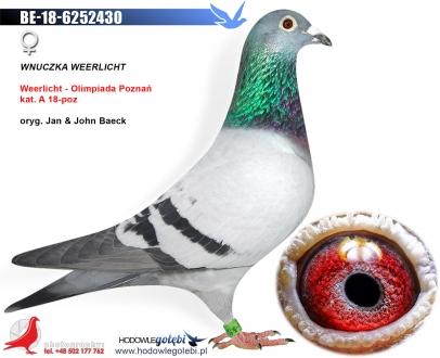 GOL_31E48E-130A7E-F5BD53-DC4953-A2AFE0-D2BA89.jpg