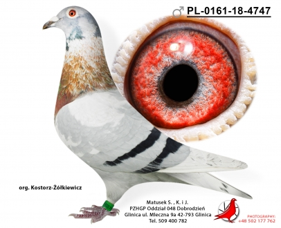 GOL_3313F1-10D6EC-B07731-2E07BF-EFCE8E-583916.jpg