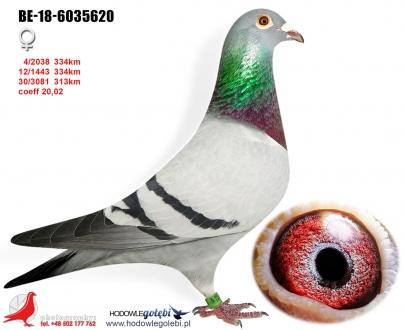 GOL_333C23-848FFA-EB15DE-FB2119-D7714C-F1FBFD.jpg