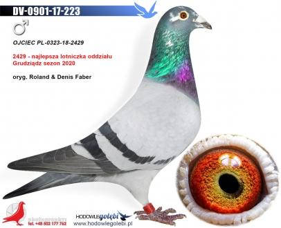 GOL_353D66-4ADA90-A29F9B-0C6085-EA5777-E1D153.jpg