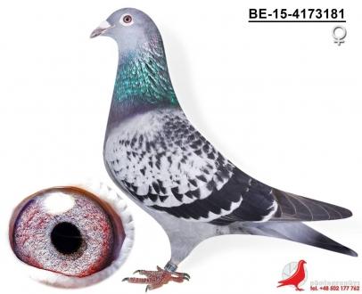 GOL_378AA4-A3EE93-FEED70-D631AA-28F810-9DF870.jpg