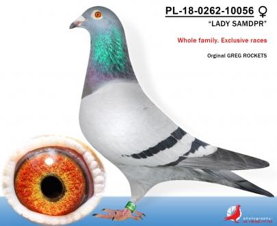 GOL_380E12-454814-CD4A89-D2FC02-8CFACD-3DF22D.jpg