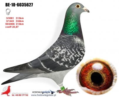 GOL_386BCD-D594E2-D29C1A-9F41EA-10EF30-8CFCE6.jpg