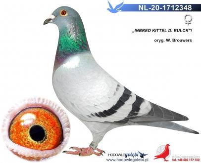 GOL_3925D5-962F30-1BC3C1-3F13AB-AE81B8-A4AE35.jpg
