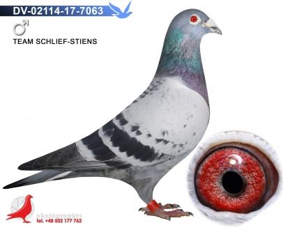 GOL_39FEC6-DD1936-972B62-B3D9AA-E514E3-394CB2.jpg