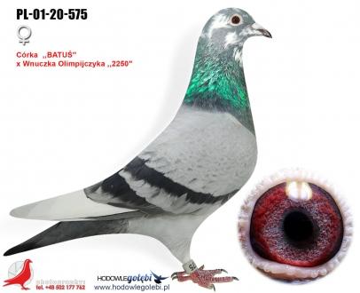 GOL_3A42E3-3D9149-AE73D9-CBFEFE-AF167C-9ECFD2.jpg