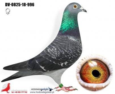 GOL_3B7346-3F0083-3B6203-EEF4CC-9C2270-5EE3DF.jpg