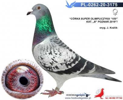 GOL_3C1C2D-250A51-FE721E-468842-CDD3C7-AE67C4.jpg
